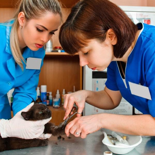 Estética animal o peluquería canina